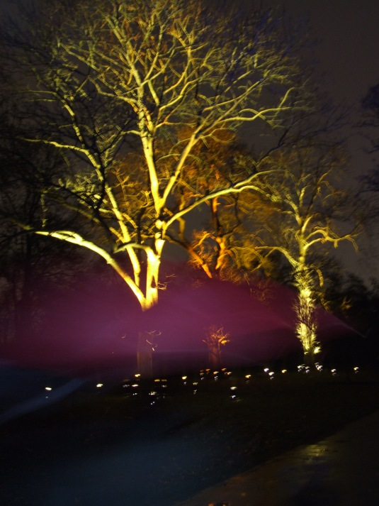 Red umbrella walks past an illumintaed Oak tree at Kew Gardens