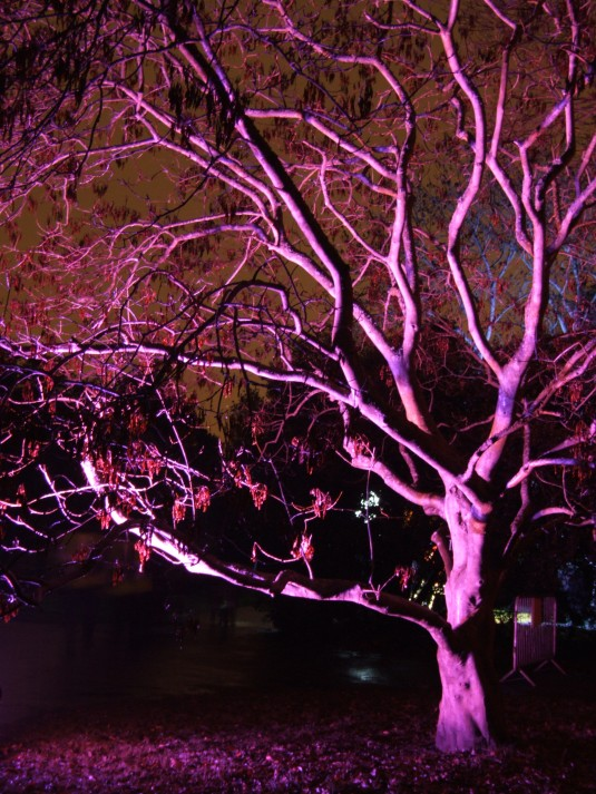 Amazing tree illuminated in purple at Kew Gardens